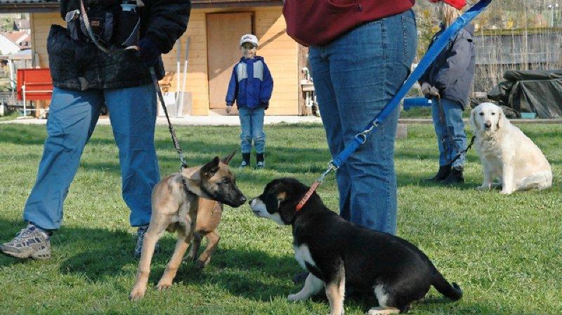C'est fait: retour des cours obligatoires pour les détenteurs de chiens en Valais