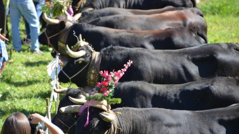 Comme le veut la tradition, les reines fleuries d'Anniviers traverseront les villages sous les applaudissements.