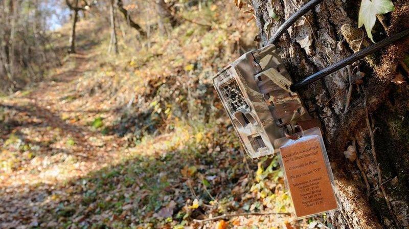 Valais: le garde-chasse cumule les procédures pénales. Notre enquête.