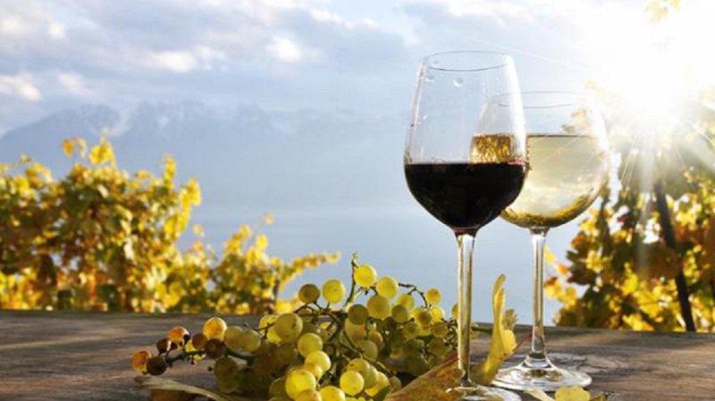 Les participants pourront déguster principalement des vins issus du vignoble local.