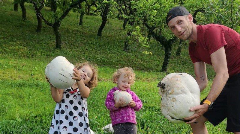 Insolite: des Sédunois découvrent plusieurs kilos d'un champignon géant