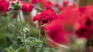 Pesticides: pas de restrictions supplémentaires pour les jardiniers amateurs