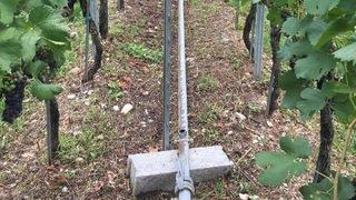 Insolite: des jets d'eau volés dans une vigne de Saillon