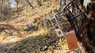 Valais: le garde-chasse cumule les infractions pénales. Notre enquête.