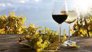 Une balade gourmande à la découverte du terroir, au cœur du vignoble des Evouettes