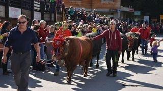 Le Pays du Saint-Bernard va faire la fête avec ses traditionnelles désalpes