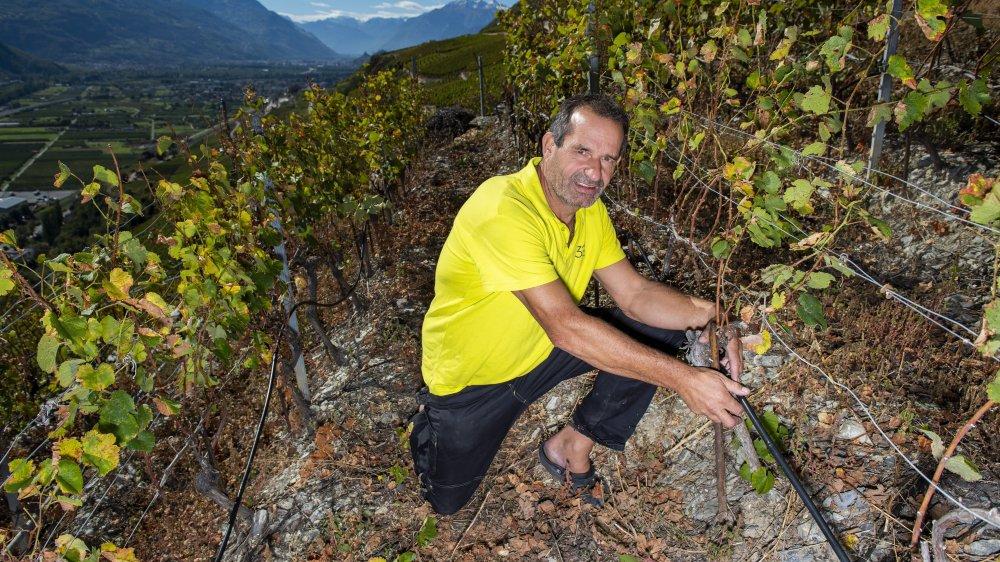 A la cave La Romaine à Flanthey, Joël Briguet veut installer le goutte-à-goutte sur l'entier du domaine afin de gérer au mieux l'eau. Ici, les cépages ont été sélectionnés en vue de produire des vins d'assemblages haut de gamme issus de variétés autochtones et internationales. Les cépages interspécifiques n'y ont pas leur place. Du moins pour l'instant.