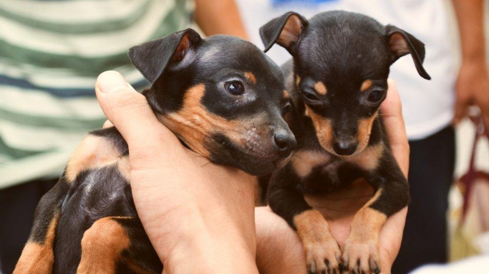 A Leytron, les chiens ne disposaient pas d'assez de place et vivaient dans les excréments et l'urine, selon la justice.