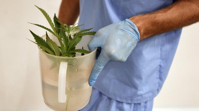 Santé: les médecins devraient bientôt pouvoir prescrire du cannabis