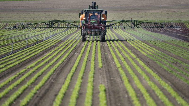 Un suivi global de l'utilisation des pesticides pour tous les domaines à risque permettra d'évaluer les objectifs de réduction.
