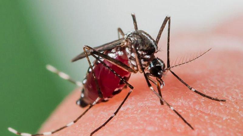 La présence du moustique tigre en Valais est confirmée.