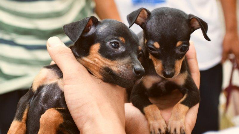 Leytron: il enfermait dix chiens dans son garage