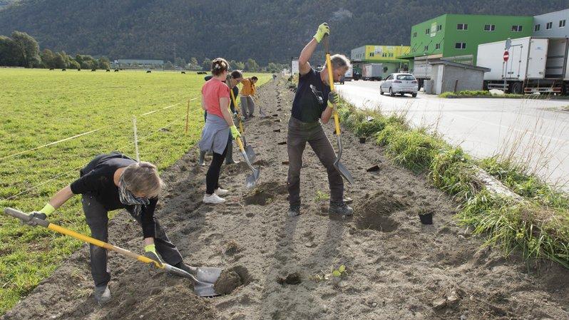 Vétroz: 620 arbres plantés pour la biodiversité