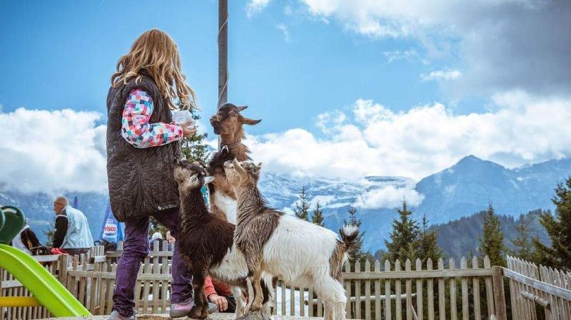 Aux Crosets, les enfants peuvent faire de belles rencontres avec les animaux.