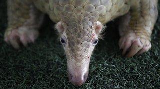 Une espèce vertébrée sur cinq victime du commerce de faune sauvage