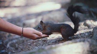 A la rencontre des écureuils à Crans-Montana