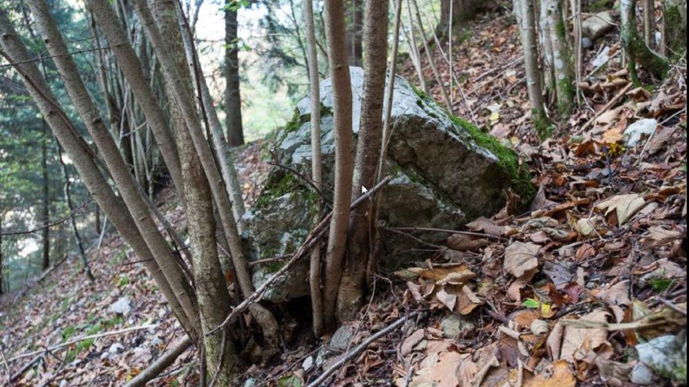 Les forêts de protection sont notamment des remparts contre les chutes de pierres.