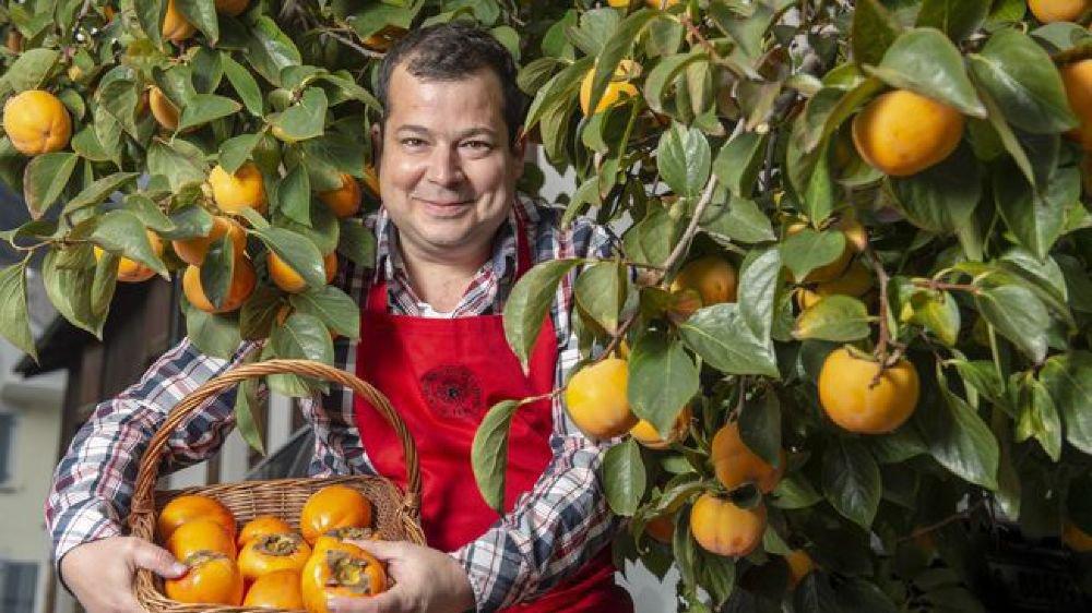 Nicolas Roduit, directeur de Roduit-Plants à Fully, devant un plaqueminier. «Les kakis sont de plus en plus demandés par nos clients. C'est un fruit à la mode.»