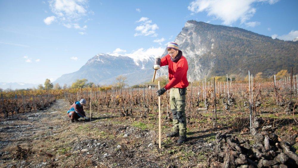 Les plantations s'achèvent ce mardi. Elles ont été pilotées par la Station ornithologique suisse.