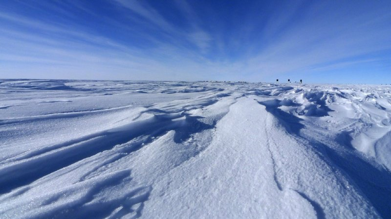 Environnement: les organismes apportés par l'homme menacent la biodiversité de l'Antarctique