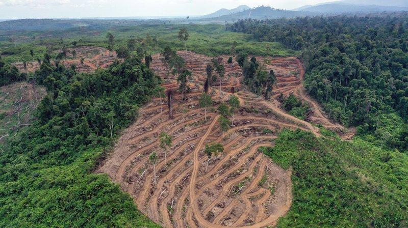 La culture de l'huile de palme pourrait être durable, selon l'EPFL