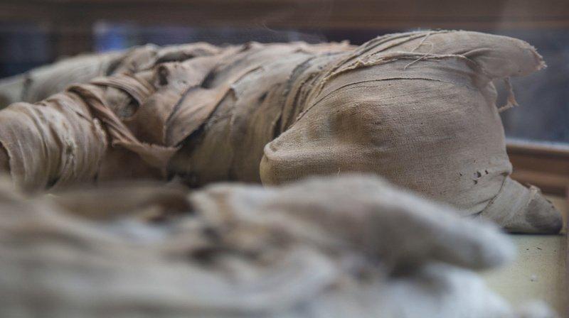 Les archéologues ont par exemple découvert des lionceaux momifiés.