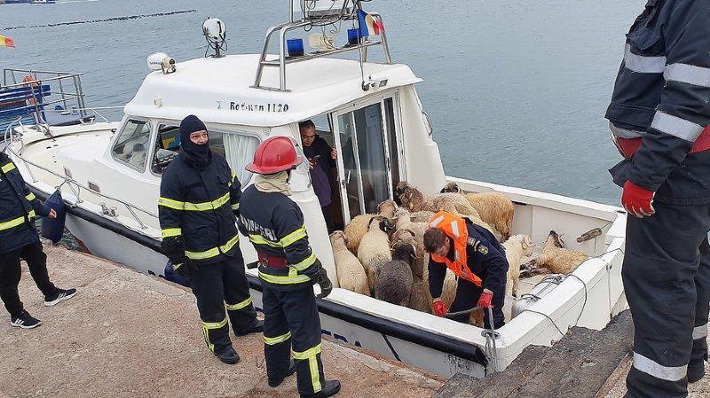 Roumanie: naufrage d'un cargo transportant 14'600 moutons