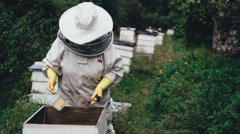 Bilan mitigé pour les apiculteurs valaisans?