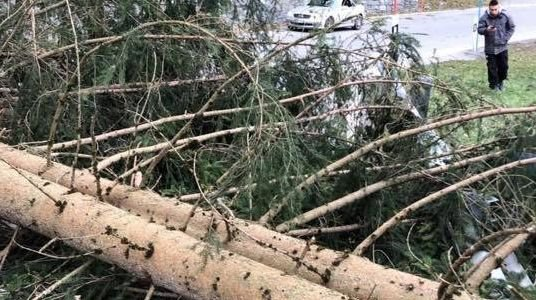 La route reliant Les Crosets et Champoussin est fermée dans les deux sens en raison de la chute de plusieurs arbres.