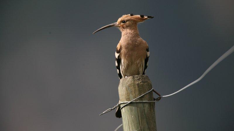 Un ouvrage pour préserver les oiseaux et la biodiversité du Valais