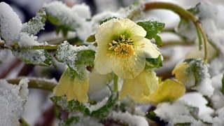 Jardinage: défiez l'hiver avec de la couleur 2/4