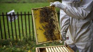 En comparaison nationale, la récolte de miel est encore pire en Valais