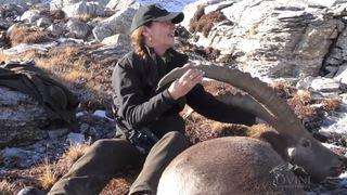 Vers une interdiction des safaris-bouquetins en Valais, la promesse de Jacques Melly