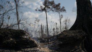 Environnement: payer un pays pour ne pas déforester, ça marche