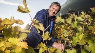 Dominique Luisier, le vigneron façonné par la montagne