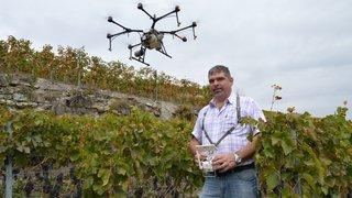 Viticulture: l'épandage par drone continue de se développer en Valais