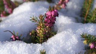 Jardinage: défiez l'hiver avec de la couleur 1/4