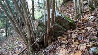 Les forêts de protection valaisannes sauvées des coupes budgétaires
