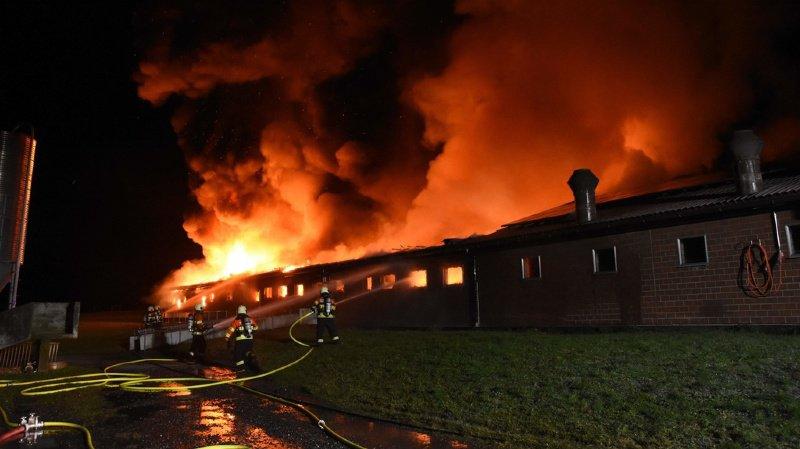 Trois cents porcs meurent dans un incendie à Brüel (SG)