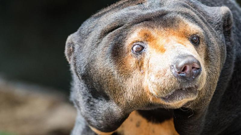 Zoo de Bâle: Lotynka, la dernière ourse du parc, est morte