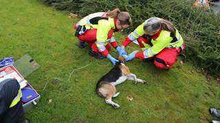 Zoug: un chien sauvé des flammes de justesse à Steinhausen