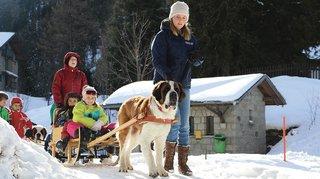 Valais: passer du bon temps avec nos amies les bêtes