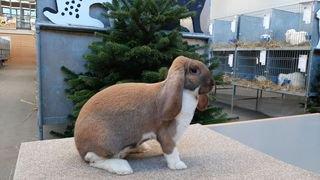 Basse-Nendaz: 540 petits animaux exposés tout le week-end