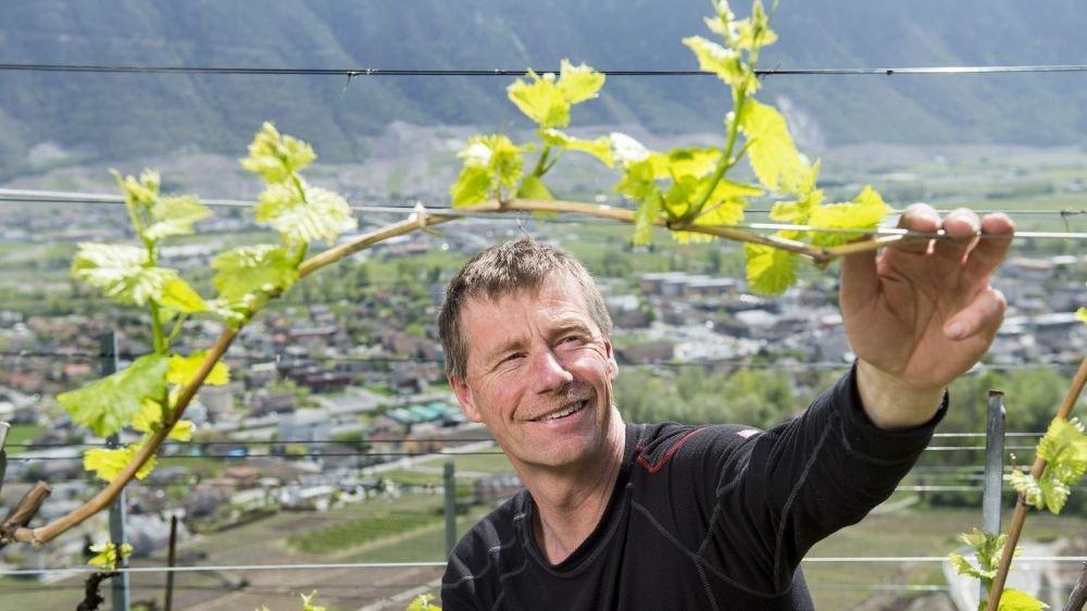 Benoît Dorsaz, à Fully, fait partie des vignerons membres de Valais Vin Bio. Il pratique la biodynamie.
