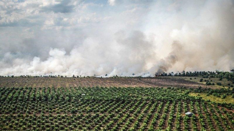 Libre-échange: référendum lancé contre l'accord avec l'Indonésie à cause de l'huile de palme