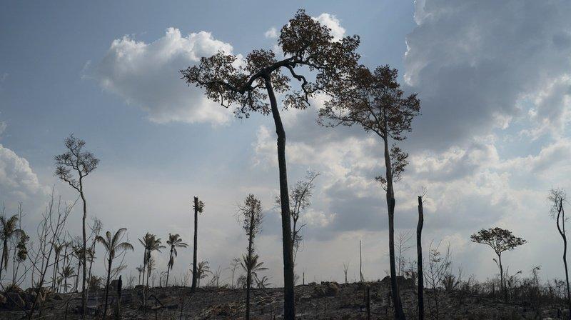Amazonie: plus de 280 km2 déboisés en janvier, un record pour ce mois