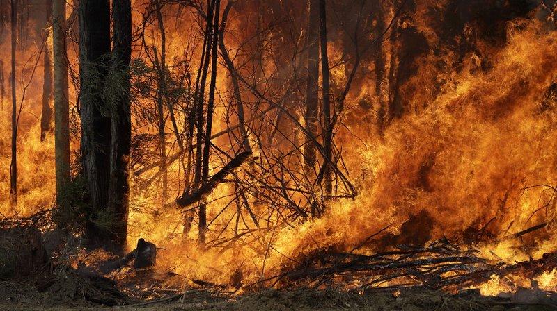 Le gouvernement conservateur australien a annoncé vendredi un plan de relance lié à ces feux de deux milliards de dollars australiens.