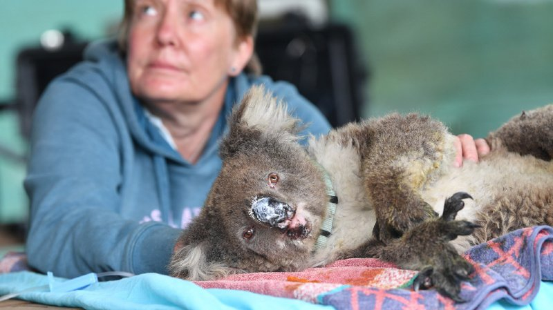 Un bilan précis des pertes pour la faune et la flore ne sera établi que dans quelques semaines (ARCHIVES).