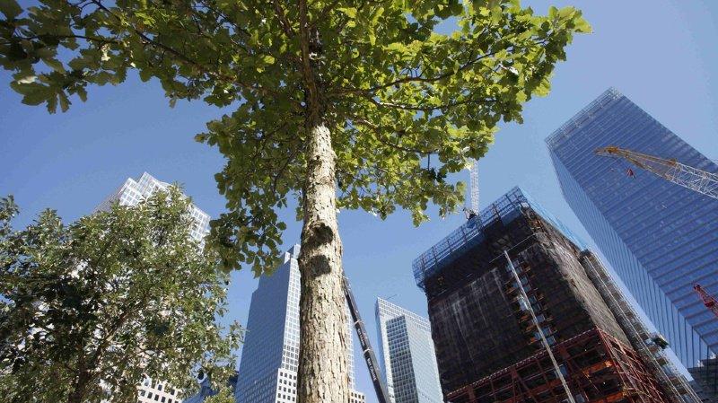 WEF 2020: tout le monde, y compris Trump, veut planter des arbres