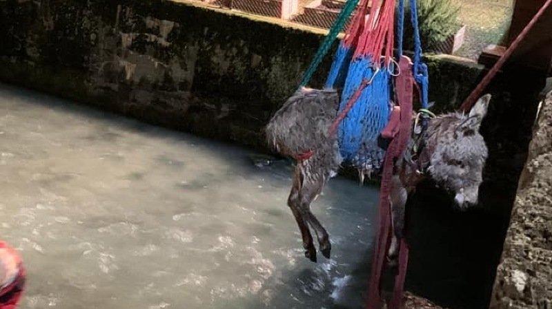 Valais: un âne sauvé des eaux à Bramois